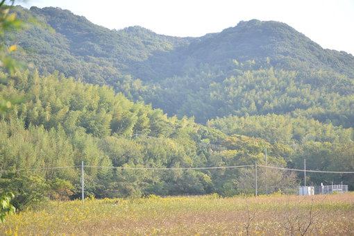 手島の風景