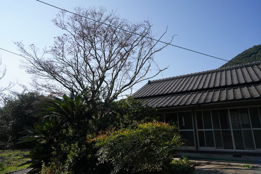 海老名さんの移住した家
